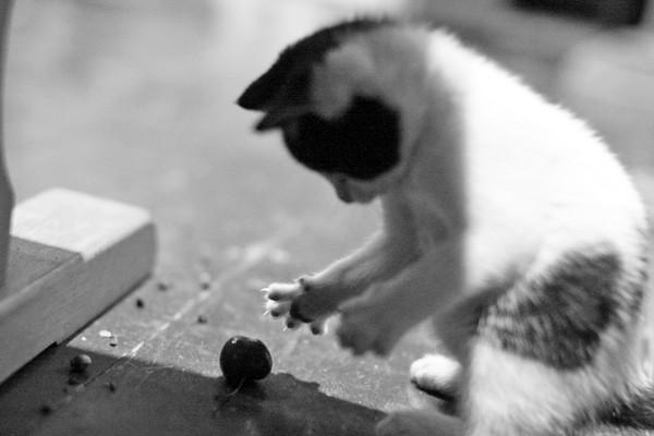Kitten Heaven - the best !