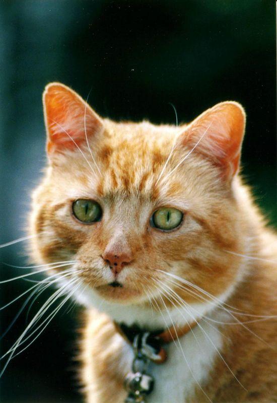 20lbs of Feline Wonder